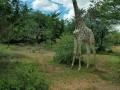 Africa Trip 8